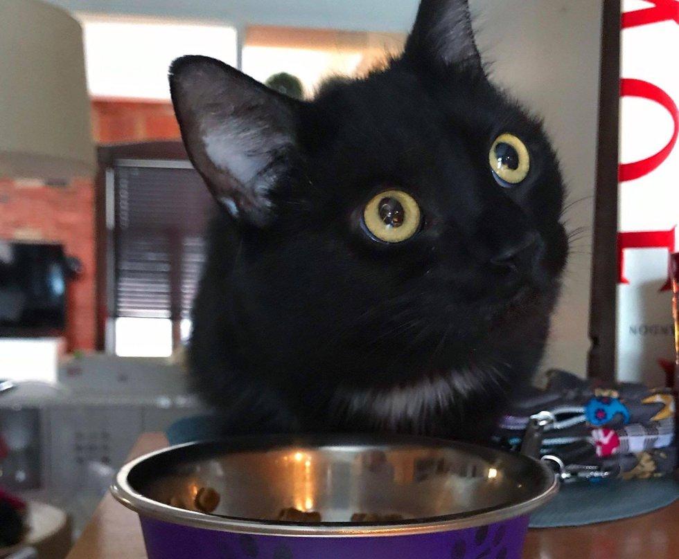Кошка приходила каждый день. Она ждала у окна, пока ее не накормят. Аппетит у нее был отменный, и она могла съесть довольно много.
